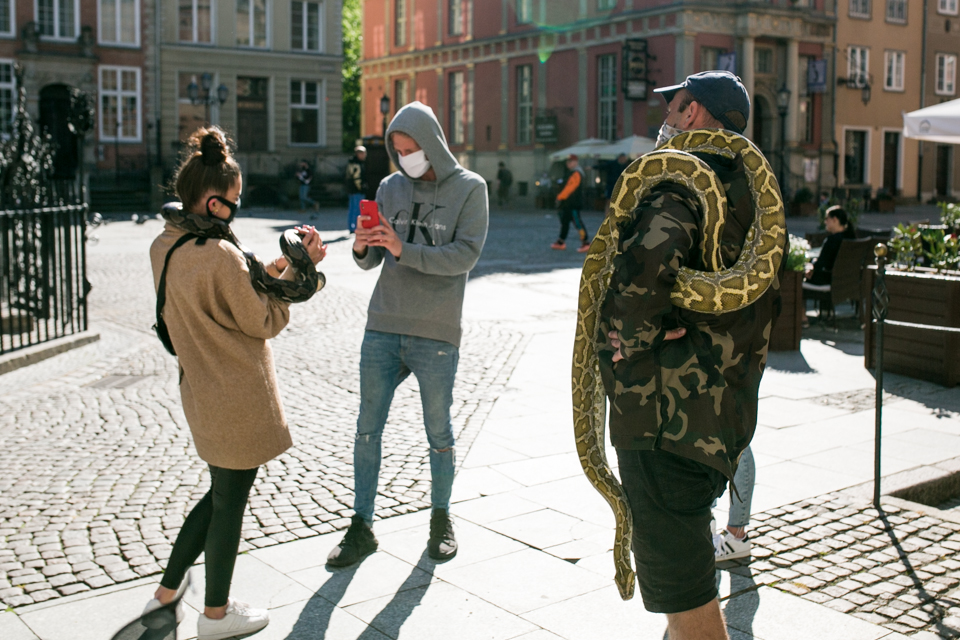 pyton, streetphoto, Polska, Gdańsk
