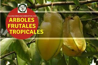 Arboles y arbustos frutales tropicales para el bosque de alimentos
