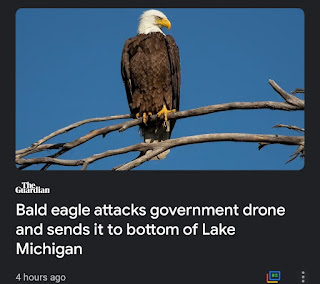 eagle attacks drone