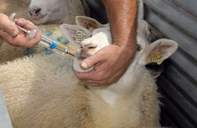 12 κτηνίατρους προσλαμβάνει ο ΕΛΓΑ