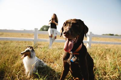 7 grandes races de chiens pour des endroits spacieux