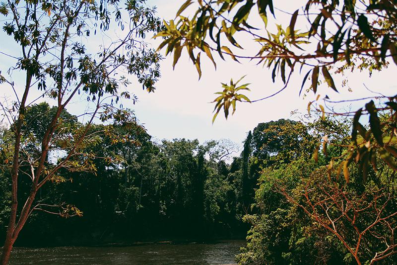 anna costa natureza salsalito jungle park hotel fazenda arvores rio lago