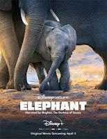 pelicula Elephant (2020)
