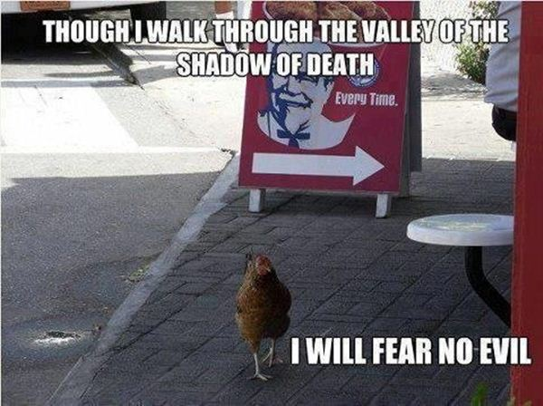 Chicken Humor Funny: 30 Funny Animal Captions - Part 10 (30 Pics)