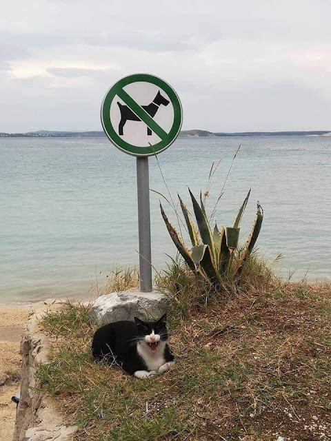 Cat laughs at no dogs sign