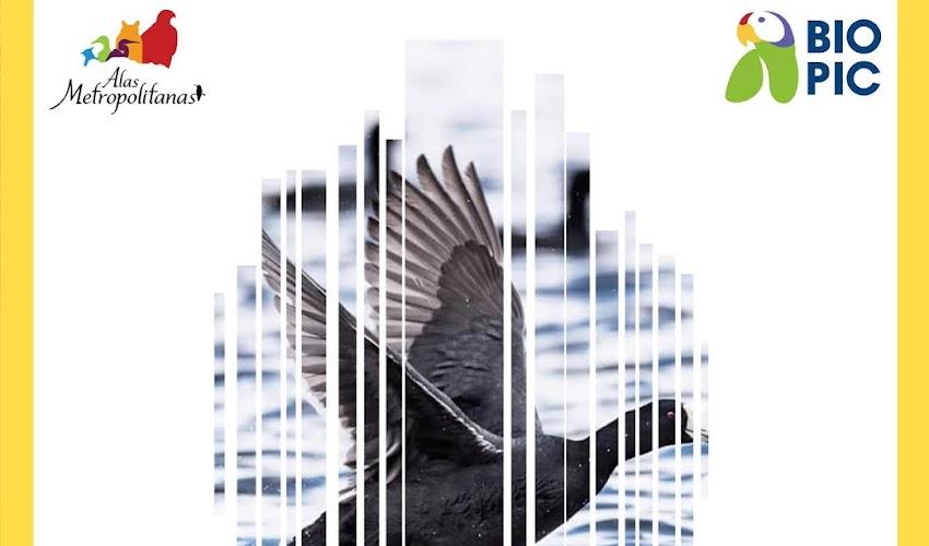 Curso-Taller: Fotografía de naturaleza enfocada en aves