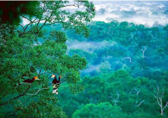 Kawali Kembangkan Program Adopsi Pohon dan Satwa Endemik Borneo