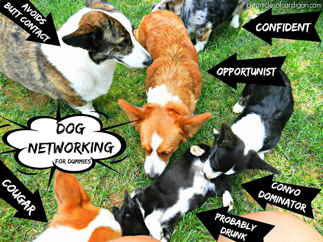 Corgis in a pile with networking type captions diagram