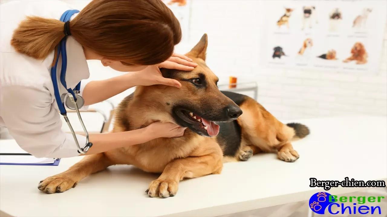 Syndrome vestibulaire chien
