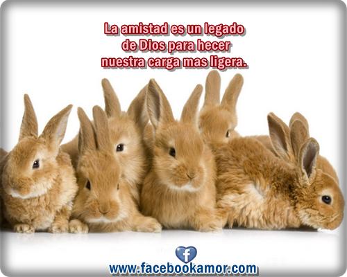 Imágenes Día De La Madre Para Whatsapp Y Facebook: Imágenes Bonitas De Amistad Para Facebook