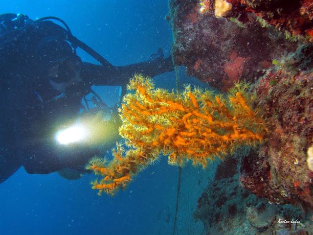 Εκπληκτικες εικονες και χρωματα στην κατδυση στον Λιμνιωνα Καλαμου