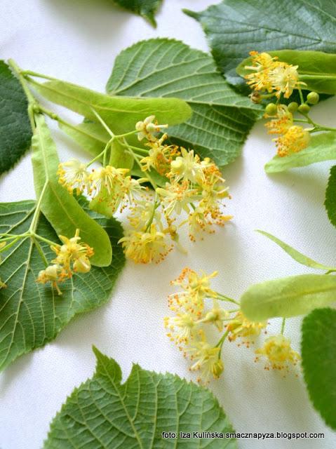 lipówka podlaska , nalewka na kwiatach lipy , nalewki , lipa , kwiaty lipy , miód lipowy , nalewka miodowo-kwiatowa z lipy , spiżarnia , domowe przetwory , domowe nalewki