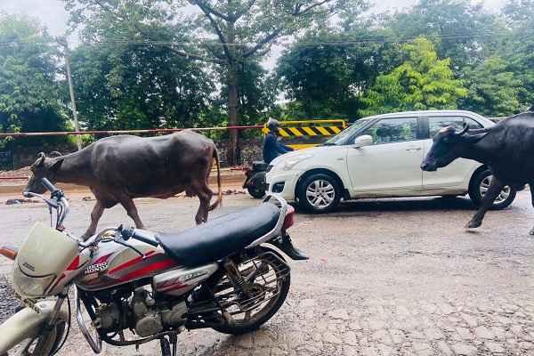 bhains-buffalo-missing-from-ankhir-village-faridabad-news