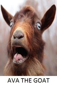 Ava the Goat