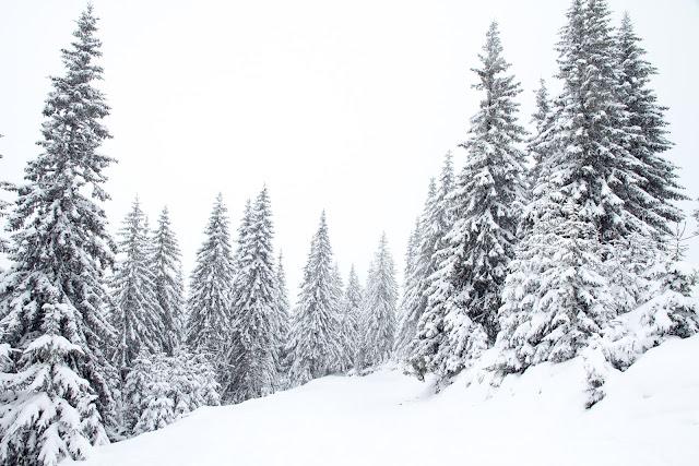 meteo neve alpi