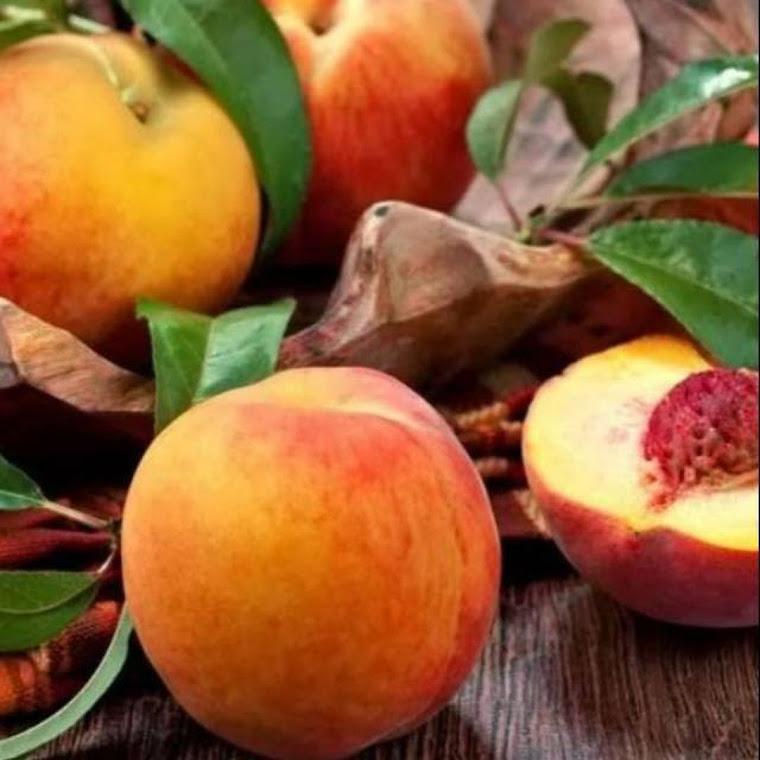 Bibit buah persik super Tebingtinggi