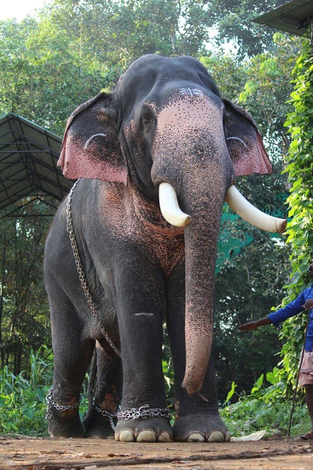 Kerala Elephant Wallpaper Hd Hd Photos Of Ker...