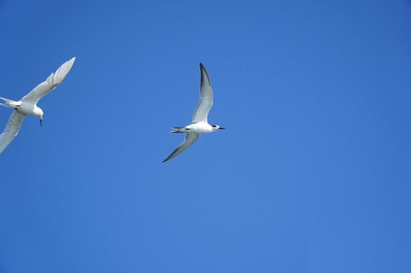 chim hải âu đang bay lượn