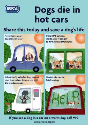 Summer time ahead. Please, it is best to leave your pet at home, unless you are sure to go for a walk by seashore, wood, moorland with him/her.Our pets die in hot cars.
