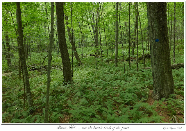 Brown Hill: ... into the humble bonds of the forest...