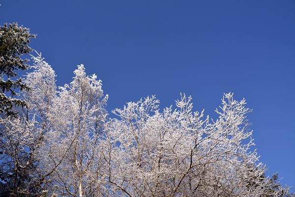 rimetetrær
