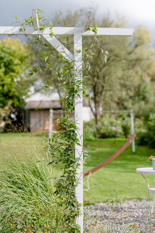 Mein Garten im September, Pomponetti, Clematis potanii