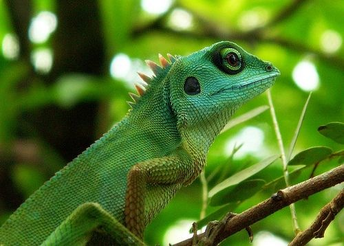 Fitness Girl Iphone Wallpaper Funny Chameleon Pictures Online News Icon