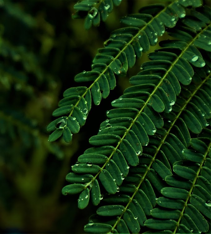 Macro Green Water drops