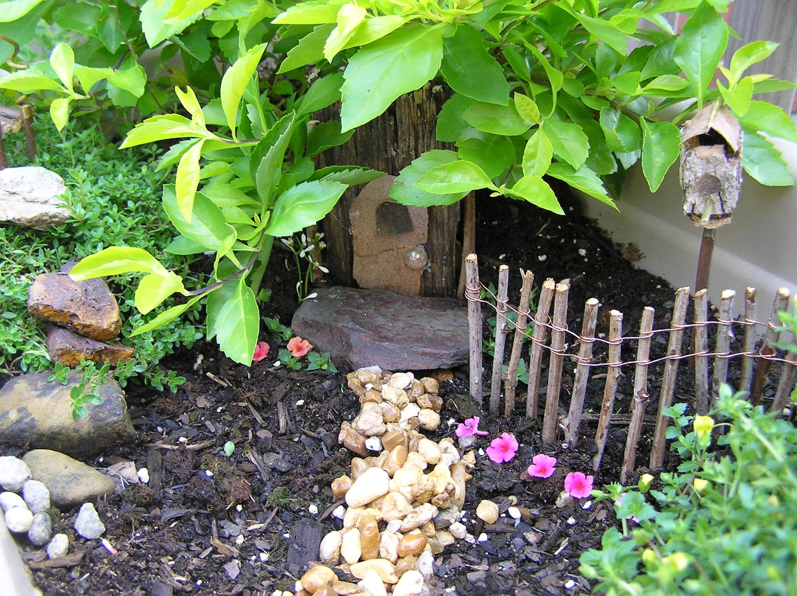 Splendid Little Stars: Miniature Garden: a Challenge