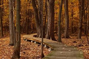alberi spogli d'autunno