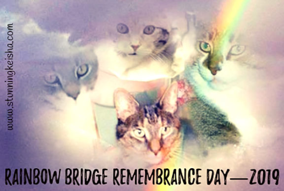 Rainbow Bridge Remembrance Day 2019