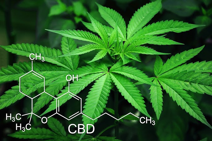 What is Cannabis | Medical Benefits | Side effects | Conclusion