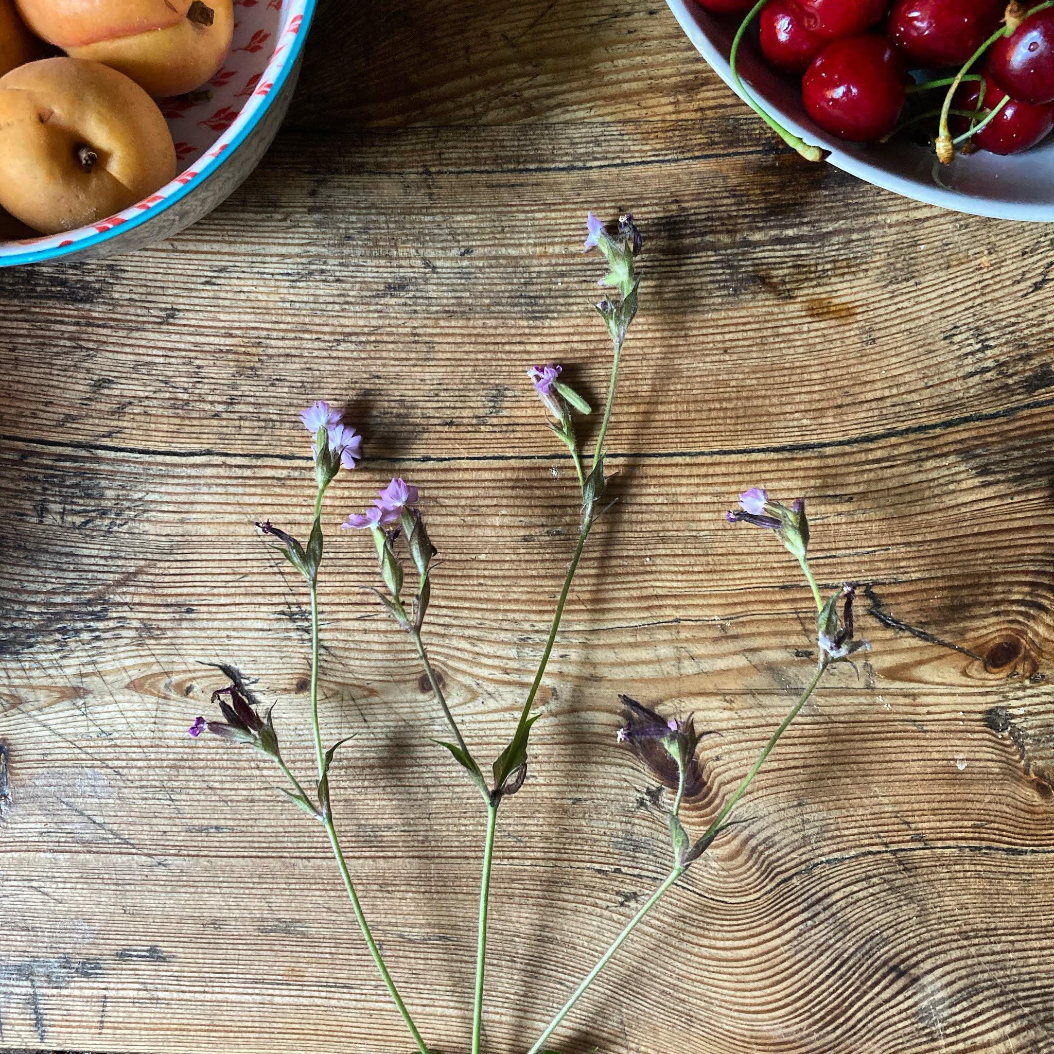 Sommer Farben Foto die guten Dinge blog