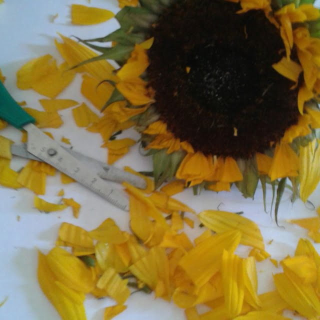 Sunflower investigation