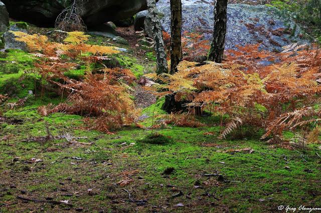 Automne contrasté en Forêt de Fontainebleau