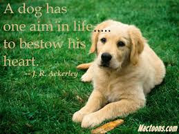 inspirational quote: a dog has one aim in life.