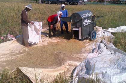 dinas pertanian majalengka sebar pengamat hama tanaman