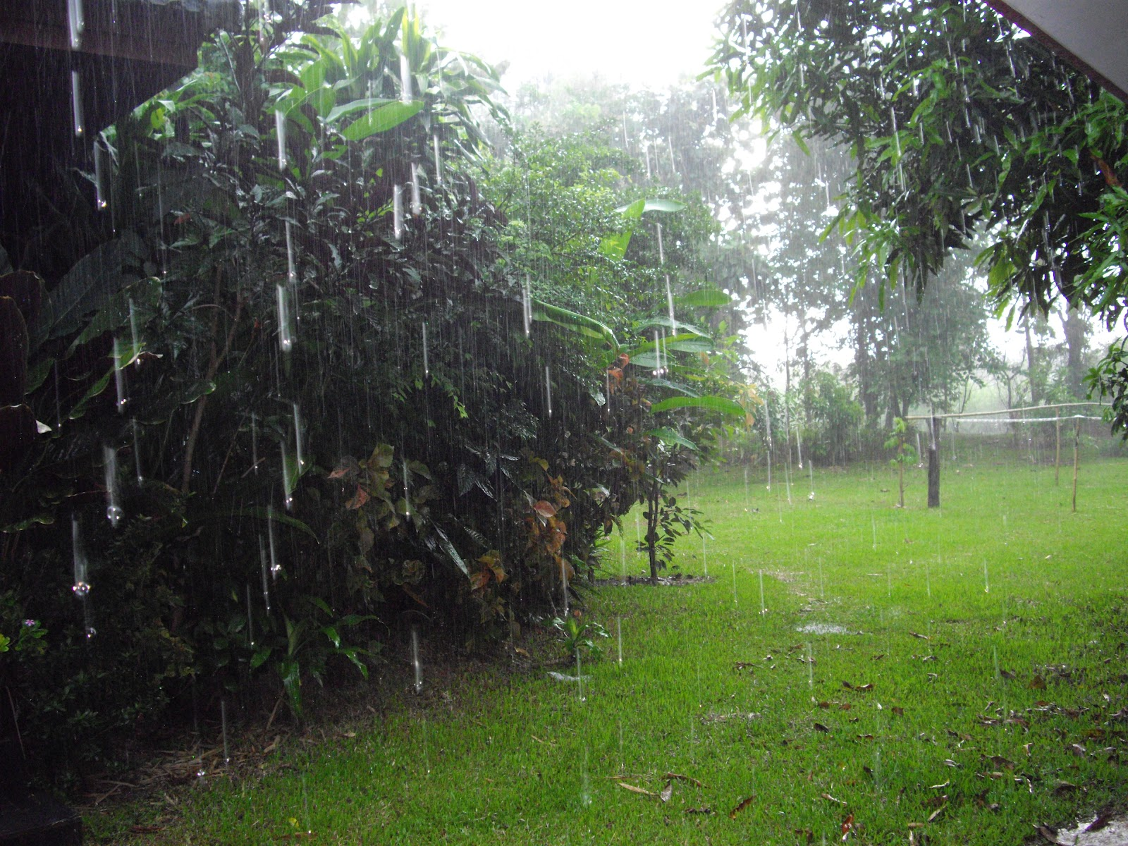 Jane's Journal: The Rainy Season In Thailand