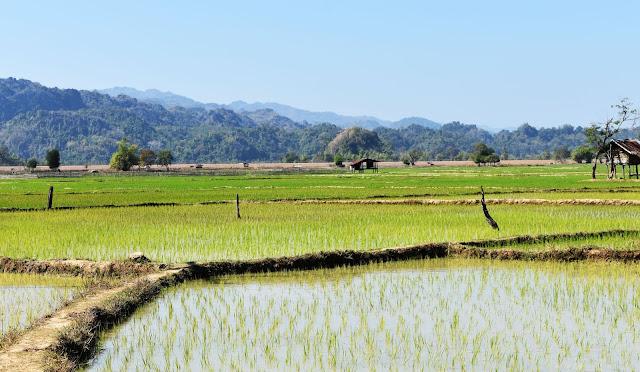 Arrozales Laos