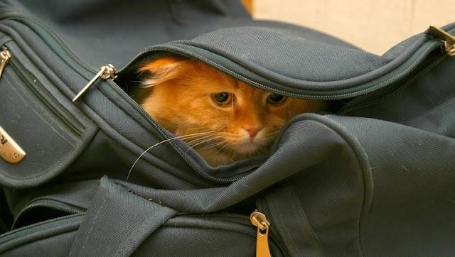 Nem adnák vissza az utasok pénzét az utazási irodák: helyette ezzel kárpótolnák őket