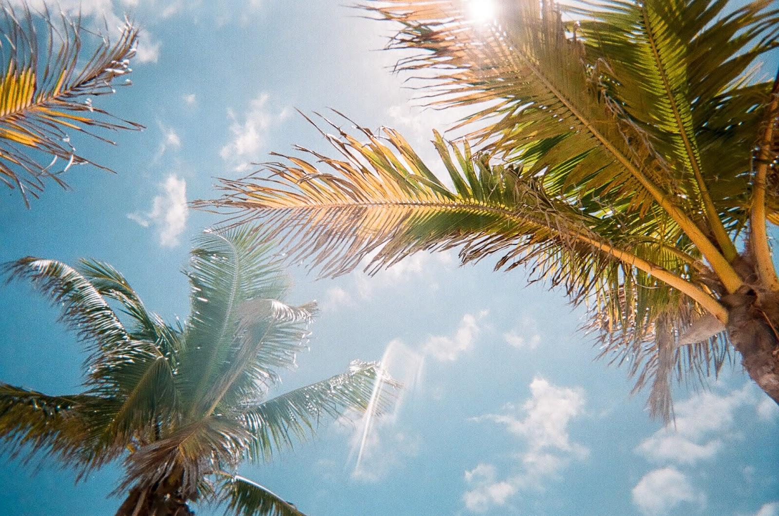 5 Reasons to visit Florida