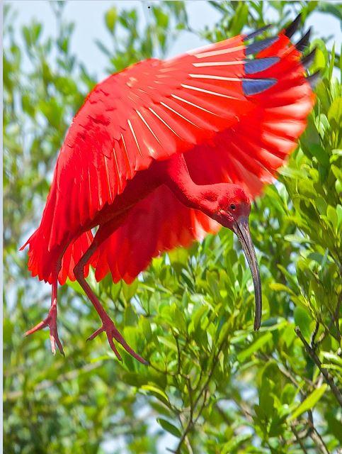 Observação de aves e trilhas , roteiros em contato com a natureza na Ilha Comprida