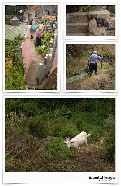 The locals go about their chores on levada