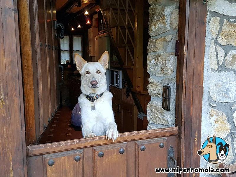 Can de Palleiro en la puerta de una casa rural en Asturias