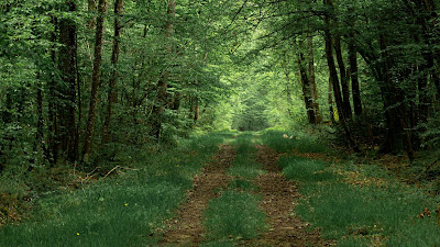 Free wallpaper Forest, path, trees, green, nature