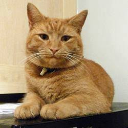 Street Cat Named Bob East Sussex