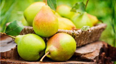 Benefits of eating pears during pregnancy