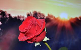 Lingkar Bunga; Aku Masih Berdoa untukmu Nona