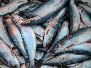 Manfaat ikan herring dan kandungan nutrisinya