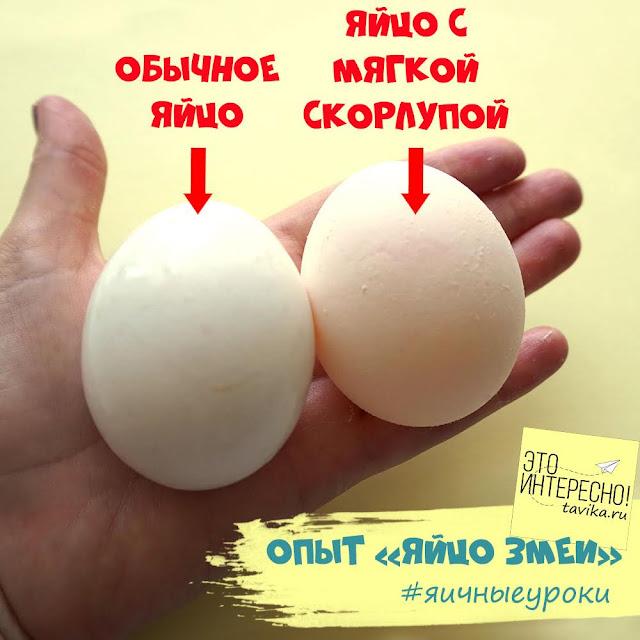 яйцо змеи из куриного яйца